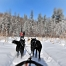 Dog Sledding at Algonquin Park